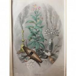 Tabak - Stahlstich, 1850