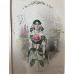 Kamelie - Stahlstich, 1850