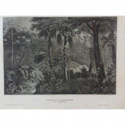 Brasilien: Urwaldscenerie -...