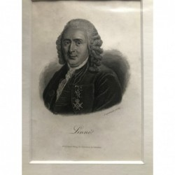 Linné - Stahlstich, 1850
